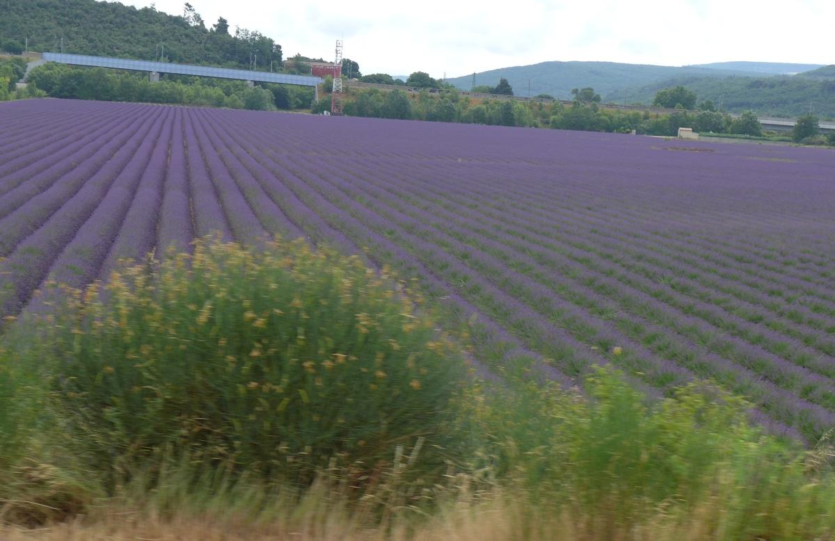 Sommer 2015 – Tag 11: Kräftige Brühe in Lyon